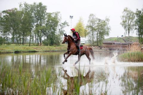 Eventing Paarden